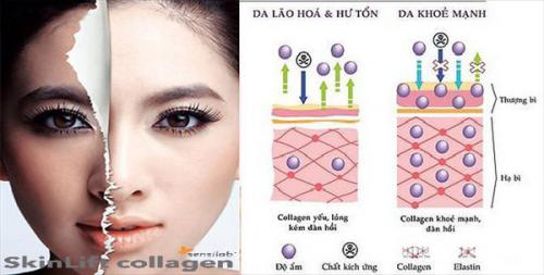 Cấu trúc collagen của da